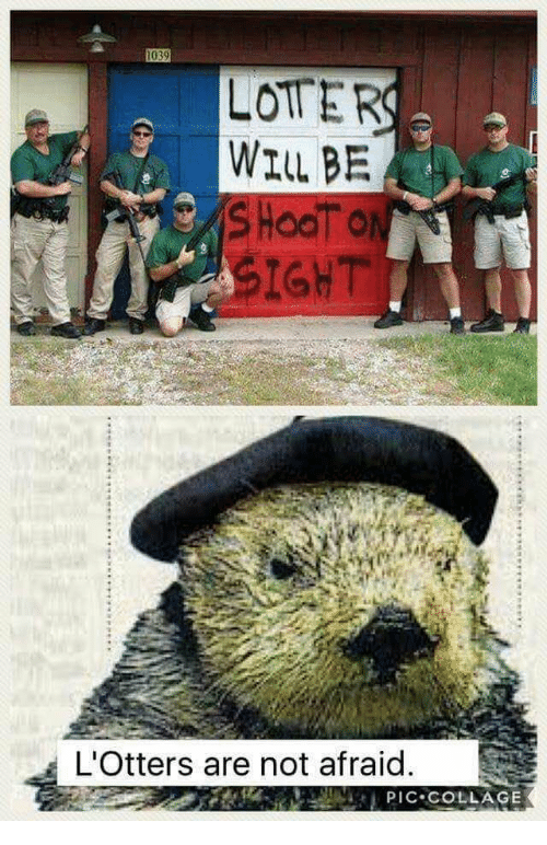 Collage, Will, and Not Afraid: LOTER  WILL BE  IGHT  L'Otters are not afraid  LPIC COLLAGE