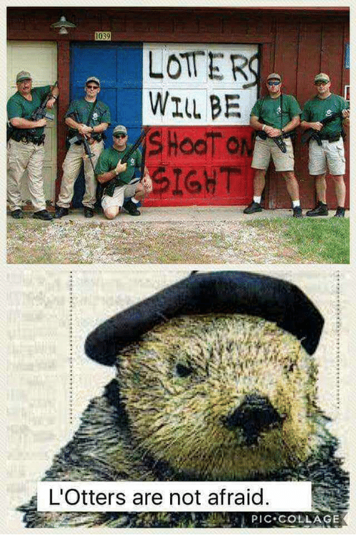 Collage, Will, and Not Afraid: LOTER  WILL BE  SIGHT  L'Otters are not afraid  PIC COLLAGE