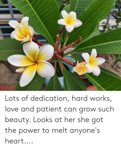 Lots of Dedication Hard Works Love and Patient Can Grow Such Beauty