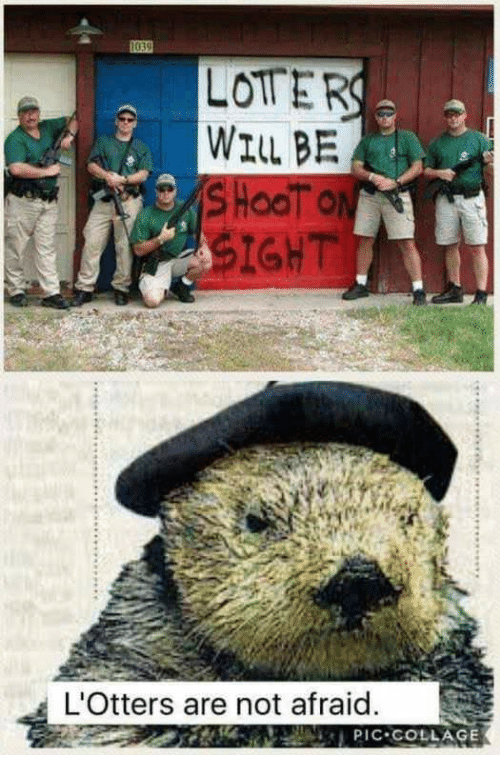 Collage, Will, and Not Afraid: LOTTER  WILL BE  IGHT  L'Otters are not afraid  tnPIC COLLAGE