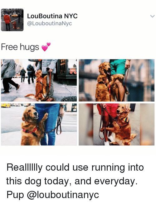 Memes, Pup, and 🤖: LouBoutina NYC  @LouboutinaNyc  Free hugs Realllllly could use running into this dog today, and everyday. Pup @louboutinanyc