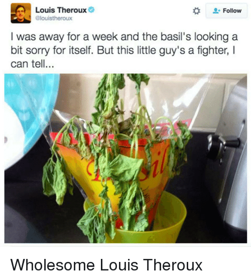 Sorry, Wholesome, and Looking: Louis Theroux  Follow  Glouistheroux  I was away for a week and the basil's looking a  bit sorry for itself. But this little guy's a fighter, I  can tell