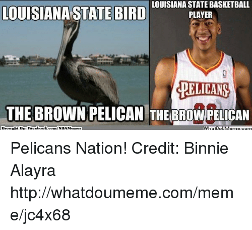 louisiana state basketball louisiana state bird player pelicans the brown 16945742 ✅ 25 best memes about pelicans pelicans memes