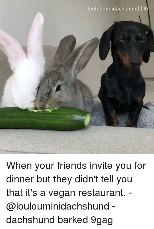 9gag, Friends, and Memes: loulouminidachshund IG When your friends invite you for dinner but they didn't tell you that it's a vegan restaurant. - @loulouminidachshund - dachshund barked 9gag
