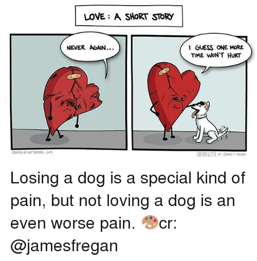 Love, Memes, and Guess: LOVE: A SHORT STORY  NEVER AGAIN.  GUESS ONE MORE  ME WON'T HURT  TAMES OF NO TRADES.COM  LAMES Losing a dog is a special kind of pain, but not loving a dog is an even worse pain. 🎨cr: @jamesfregan