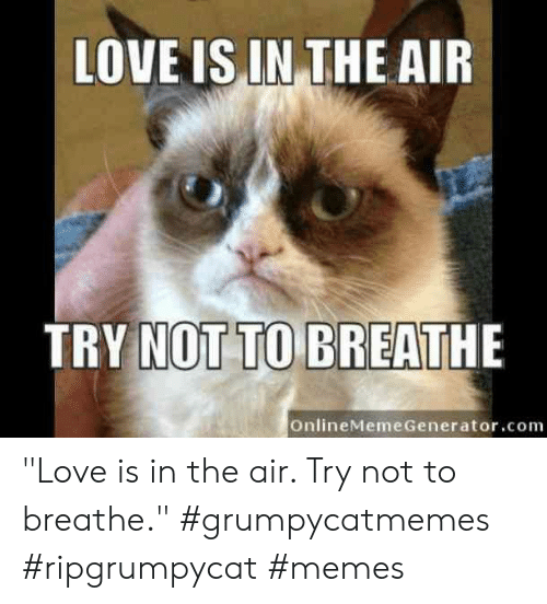 "Love, Memes, and Air: LOVE IS IN THE AIR  TRY NOT TO BREATHE  OnlineMeme Generator.com ""Love is in the air. Try not to breathe.""  #grumpycatmemes #ripgrumpycat #memes"