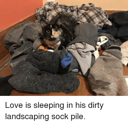 Love, Dirty, and Sleeping: Love is sleeping in his dirty landscaping sock pile.
