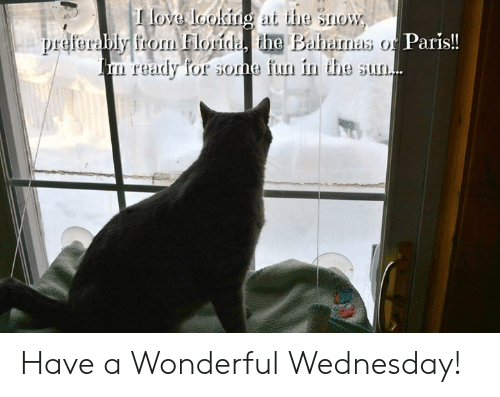 Love, Memes, and Florida: love loolingat the snow  bly from Florida, the Baharnas o Paris!!  ready for sone fun in the sun. Have a Wonderful Wednesday!