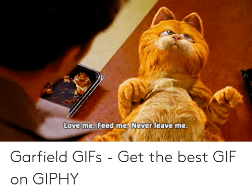 Love Me Feed Me Never Leave Me Garfield Gifs Get The Best Gif On Giphy Gif Meme On Me Me