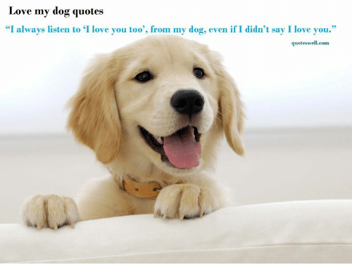 Love My Dog Quotes I Always Listen To I Love You Too' From My Dog Amazing I Love My Dog Quotes