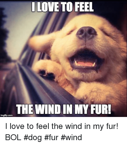 Dogs, Memes, and 🤖: LOVE TO FEEL  THE WINDIN MY FUR!  imgflip com I love to feel the wind in my fur!          BOL  #dog #fur #wind