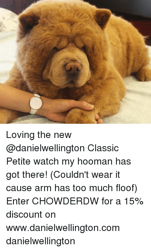 Memes, Too Much, and Watch: Loving the new @danielwellington Classic Petite watch my hooman has got there! (Couldn't wear it cause arm has too much floof) Enter CHOWDERDW for a 15% discount on www.danielwellington.com danielwellington