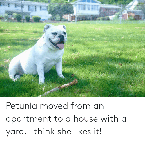 House, Lte, and She: LTE Petunia moved from an apartment to a house with a yard. I think she likes it!