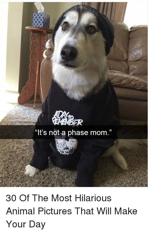 """Animal, Pictures, and Hilarious: """"lt's not a phase mom,"""" 30 Of The Most Hilarious Animal Pictures That Will Make Your Day"""
