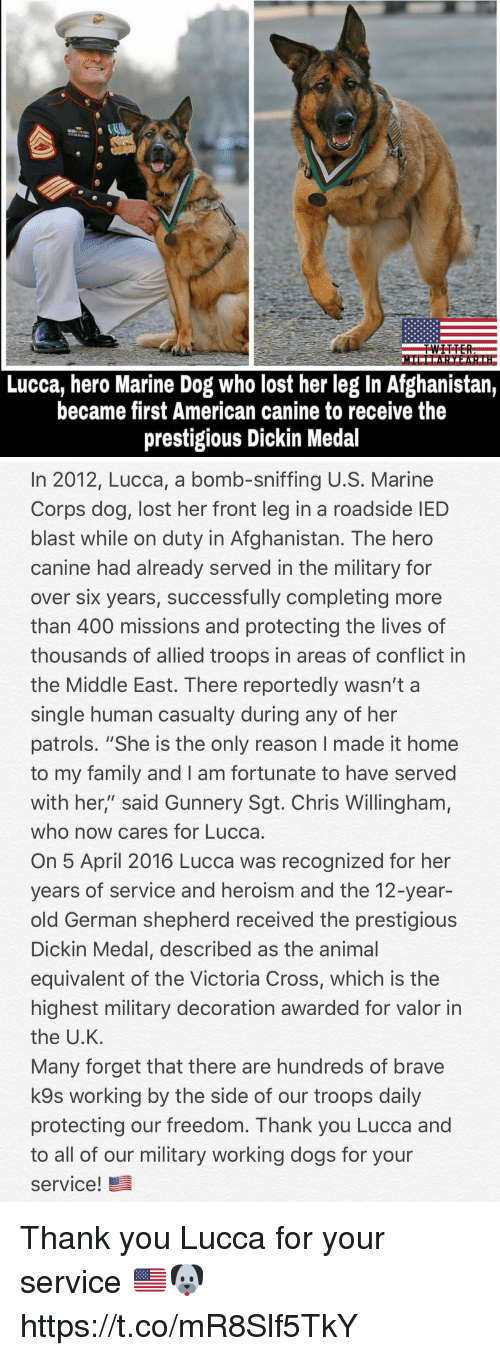 """Dogs, Family, and Memes: Lucca, hero Marine Dog who lost her leg In Afghanistan,  became first American canine to receive the  prestigious Dickin Medal   In 2012, Lucca, a bomb-sniffing U.S. Marine  Corps dog, lost her front leg in a roadside IED  blast while on duty in Afghanistan. The hero  canine had already served in the military for  over six years, successfully completing more  than 400 missions and protecting the lives of  thousands of allied troops in areas of conflict in  the Middle East. There reportedly wasn't a  single human casualty during any of her  patrols. """"She is the only reason I made it home  to my family and I am fortunate to have served  with her,"""" said Gunnery Sgt. Chris Willingham,  who now cares for Lucca.  On 5 April 2016 Lucca was recognized for her  years of service and heroism and the 12-year-  old German shepherd received the prestigious  Dickin Medal, described as the animal  equivalent of the Victoria Cross, which is the  highest military decoration awarded for valor in  the U.K  Many forget that there are hundreds of brave  k9s working by the side of our troops daily  protecting our freedom. Thank you Lucca and  to all of our military working dogs for your  service!髫 Thank you Lucca for your service 🇺🇸🐶 https://t.co/mR8Slf5TkY"""