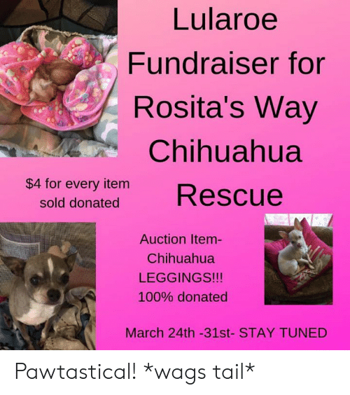 6fde3ba44ac859 Chihuahua, Memes, and Leggings: Lularoe Fundraiser for Rosita's Way  Chihuahua $4 for every