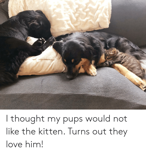 Love, Thought, and Him: LUR I thought my pups would not like the kitten. Turns out they love him!