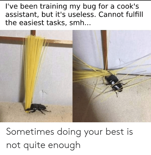 Smh, Best, and Quite: l've been training my bug for a cook's  assistant, but it's useless. Cannot fulfill  the easiest tasks, smh.. Sometimes doing your best is not quite enough