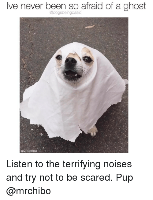 Memes, Ghost, and Never: lve never been so afraid of a ghost  @dogsbeingbasic  @MRCHIBO Listen to the terrifying noises and try not to be scared. Pup @mrchibo
