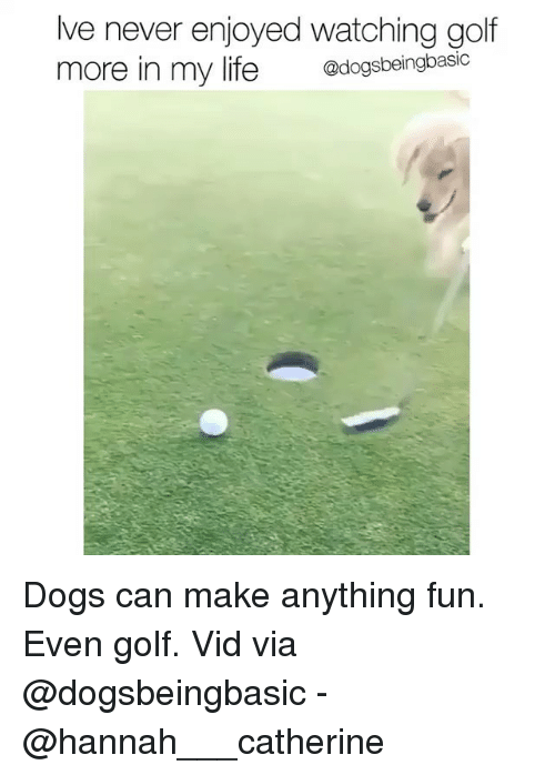 Dogs, Life, and Memes: lve never enjoyed watching golf  more in my life dogsbei  @dogsbeingbasic Dogs can make anything fun. Even golf. Vid via @dogsbeingbasic - @hannah___catherine