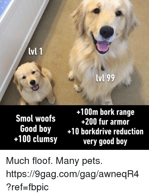 9gag, Anaconda, and Bailey Jay: lvl 1  lvl 99  +100m bork range  Smol woofs  200 fur armor  Good boy  10 borkdrive reduction  +100 clumsy  very good boy Much floof. Many pets. https://9gag.com/gag/awneqR4?ref=fbpic