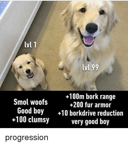Anaconda, Bailey Jay, and Memes: lvl 1  lvl 99  +100m bork range  Smol woofs  +200 fur armor  Good boy  10 borkdrive reduction  +100 clumsy  very good boy progression