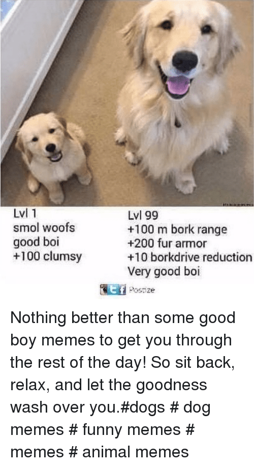 Anaconda, Bailey Jay, and Dogs: Lvl 1  smol woofs  good boi  +100 clumsy  Lvl 99  +100 m bork range  +200 fur armor  +10 borkdrive reduction  Very good boi  Postze  tf Nothing better than some good boy memes to get you through the rest of the day! So sit back, relax, and let the goodness wash over you.#dogs # dog memes # funny memes # memes # animal memes