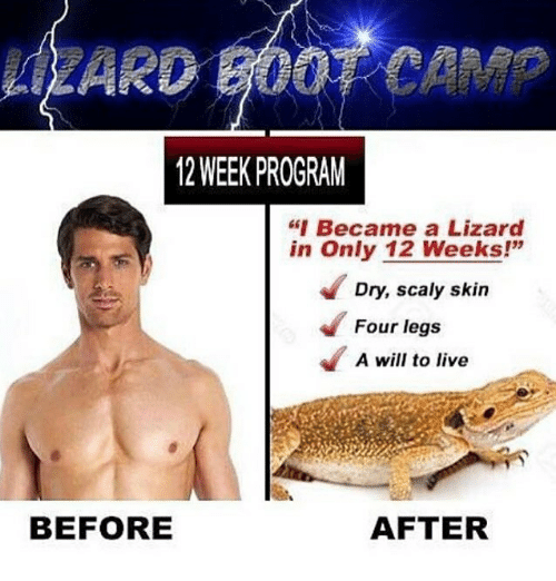 "Memes, Live, and 🤖: LZARD BOOT CAMP  12 WEEK PROGRAM  ""Became a Lizard  in Only 12 Weeks!""  Dry, scaly skin  Four legs  A will to live  BEFORE  AFTER"