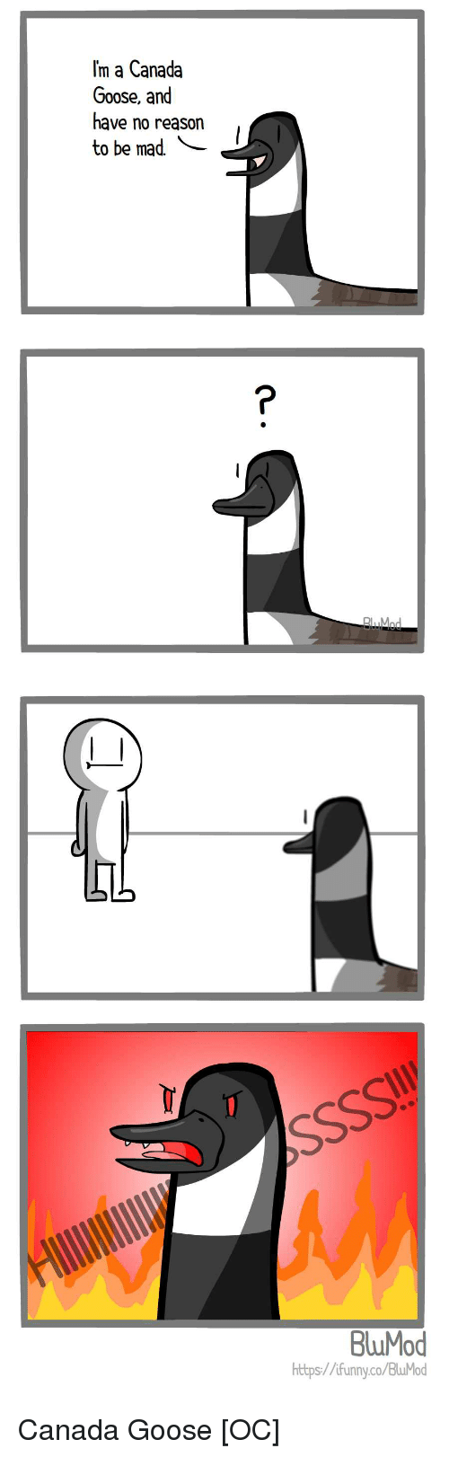 Canada, Canadian, and Mad: m a Canada  Goose, and  have no reason  to be mad  Mod  BluMod  https://ifunnyco/BluMod Canada Goose [OC]