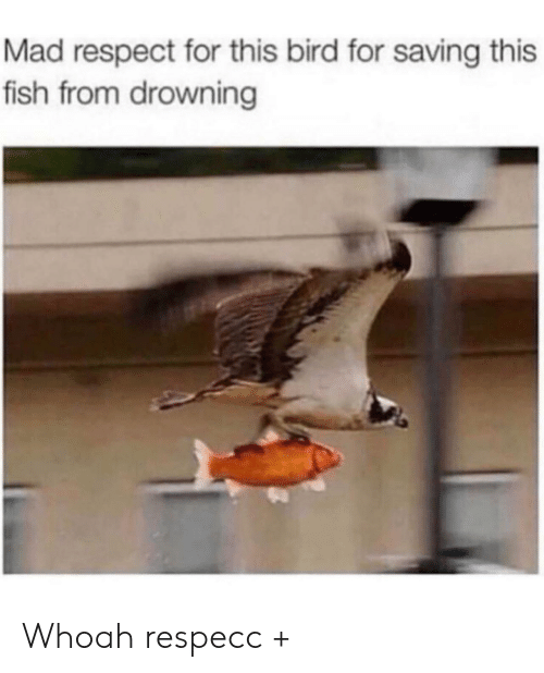 Respect, Fish, and Mad: Mad respect for this bird for saving this  fish from drowning Whoah respecc +