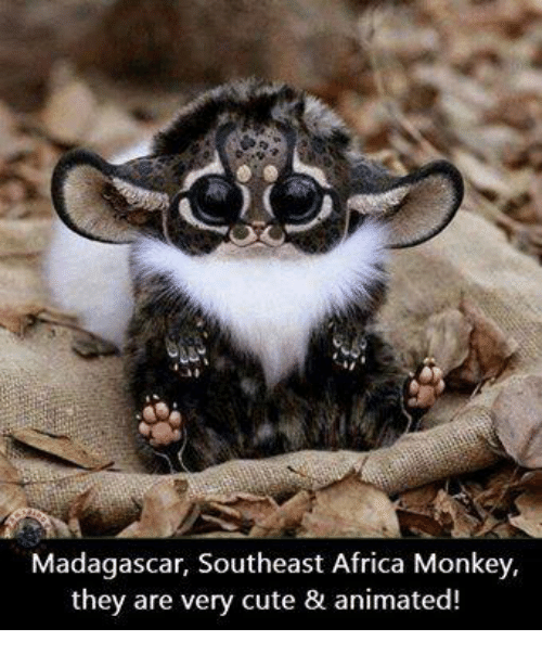 Madagascar Southeast Africa Monkey They Are Very Cute