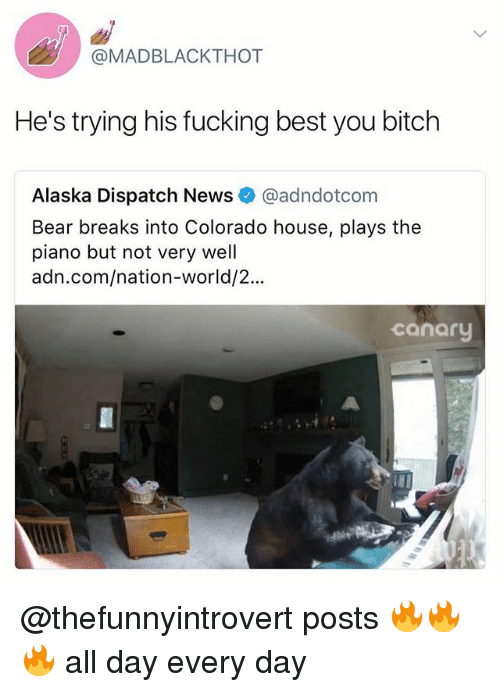 Bitch, Fucking, and Funny: @MADBLACKTHOT  He's trying his fucking best you bitch  Alaska Dispatch News@adndotcom  Bear breaks into Colorado house, plays the  piano but not very well  adn.com/nation-world/2...  canary @thefunnyintrovert posts 🔥🔥🔥 all day every day