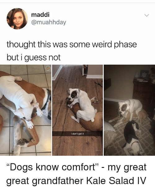 """Memes, Weird, and Guess: maddi  @muahhday  thought this was some weird phase  but i guess not  I don't get it """"Dogs know comfort"""" - my great great grandfather Kale Salad IV"""