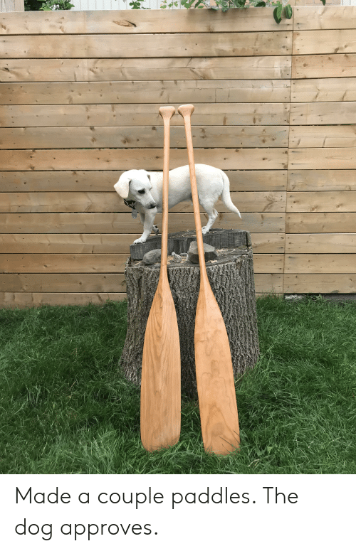 Made a Couple Paddles the Dog Approves | Dog Meme on ME ME