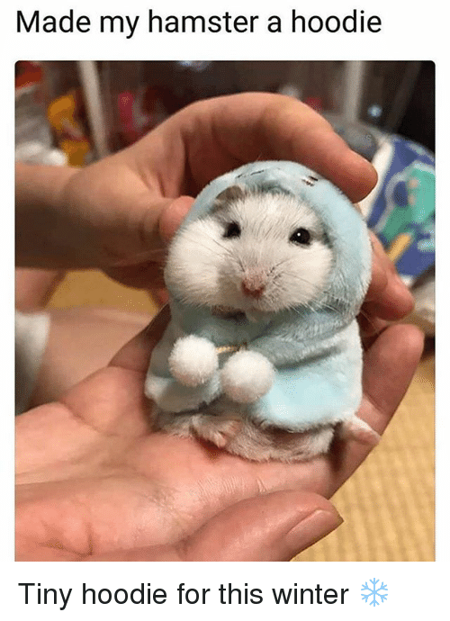 Memes, Winter, and Hamster: Made my hamster a hoodie Tiny hoodie for this winter ❄️