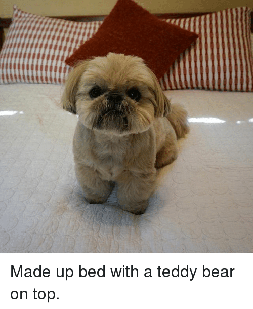 Memes, Bear, and 🤖: Made up bed with a teddy bear on top.