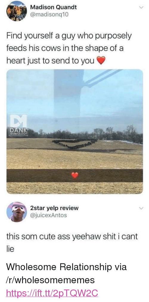 """Ass, Cute, and Shit: Madison Quandt  @madisonq10  Find yourself a guy who purposely  feeds his cows in the shape of a  heart just to send to you  DAN  MEMEOLOGY  2star yelp review  juicexAntos  this som cute ass yeehaw shit i cant  lie <p>Wholesome Relationship via /r/wholesomememes <a href=""""https://ift.tt/2pTQW2C"""">https://ift.tt/2pTQW2C</a></p>"""