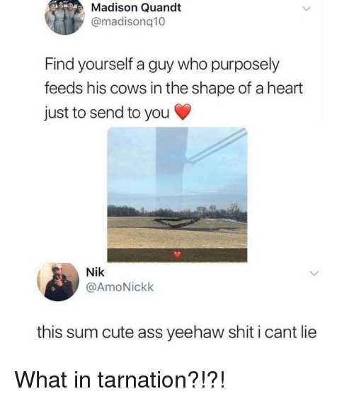 Ass, Cute, and Memes: Madison Quandt  @madisonq10  Find yourself a guy who purposely  feeds his cows in the shape of a heart  just to send to you  Nik  @AmoNickk  this sum cute ass yeehaw shit i cant lie What in tarnation?!?!