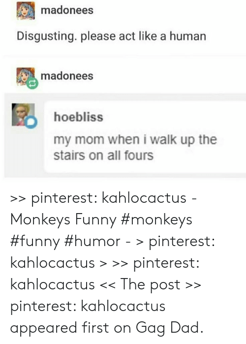 Dad, Funny, and Pinterest: madonees  Disgusting. please act like a human  madonees  hoebliss  my mom when i walk up the  stairs on all fours >> pinterest: kahlocactus - Monkeys Funny #monkeys #funny #humor - > pinterest: kahlocactus > >> pinterest: kahlocactus << The post >> pinterest: kahlocactus appeared first on Gag Dad.