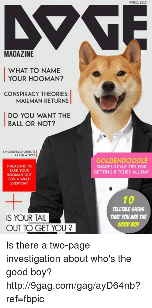 9gag, Dank, and Good: MAGAZINE  WHAT TO NAME  YOUR HOOMAN?  CONSPIRACY THEORIES:  MAILMAN RETURNS  DO YOU WANT THE  BALL OR NOT?  S HOUSEHOLD OBJECTS  AS CHEW TOYS  9 REASONS TO  TAKE YOUR  HOOMAN OUT  FOR A WALK  EVERYDAY  IS YOUR TAIL  OUT TO GET YOU?  APRIL 2017  GOLDENDOODLE  SHARES STYLE TIPS FOR  GETTING BITCHES ALL DAY  10  TELLTALE SIGNS  THAT you ARE THE  GOOD Boy Is there a two-page investigation about who's the good boy? http://9gag.com/gag/ayD64nb?ref=fbpic