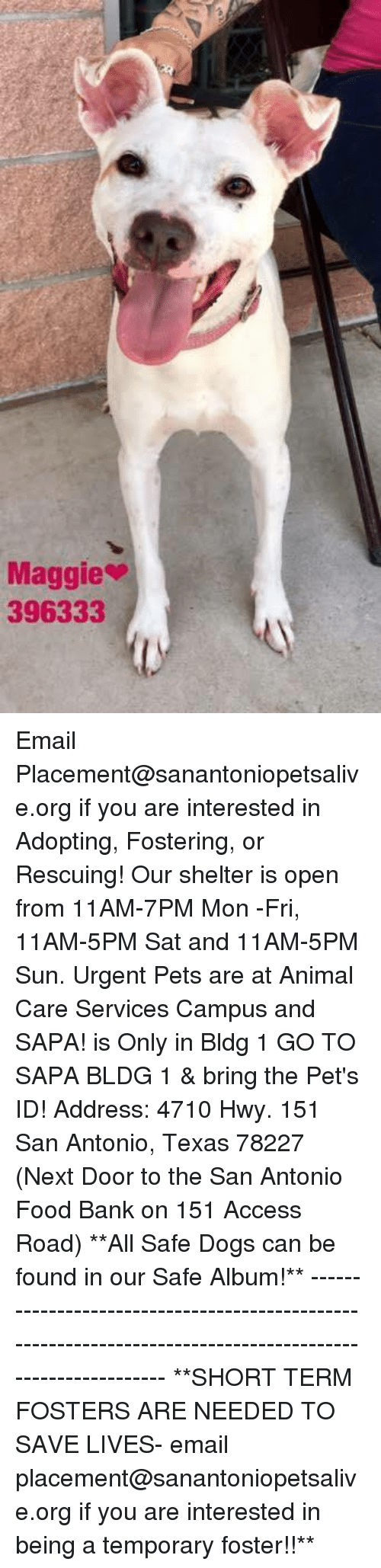 Dogs, Food, and Memes: Maggie  396333 Email Placement@sanantoniopetsalive.org if you are interested in Adopting, Fostering, or Rescuing!  Our shelter is open from 11AM-7PM Mon -Fri, 11AM-5PM Sat and 11AM-5PM Sun.  Urgent Pets are at Animal Care Services Campus and SAPA! is Only in Bldg 1 GO TO SAPA BLDG 1 & bring the Pet's ID! Address: 4710 Hwy. 151 San Antonio, Texas 78227 (Next Door to the San Antonio Food Bank on 151 Access Road)  **All Safe Dogs can be found in our Safe Album!** ---------------------------------------------------------------------------------------------------------- **SHORT TERM FOSTERS ARE NEEDED TO SAVE LIVES- email placement@sanantoniopetsalive.org if you are interested in being a temporary foster!!**