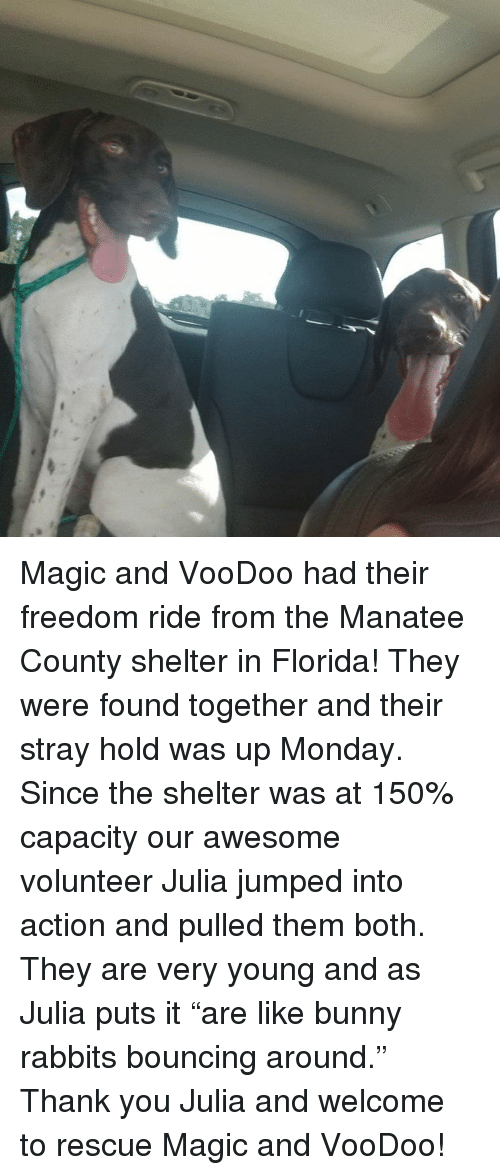Magic and VooDoo Had Their Freedom Ride From the Manatee County