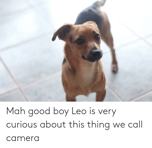 Camera, Good, and Boy: Mah good boy Leo is very curious about this thing we call camera
