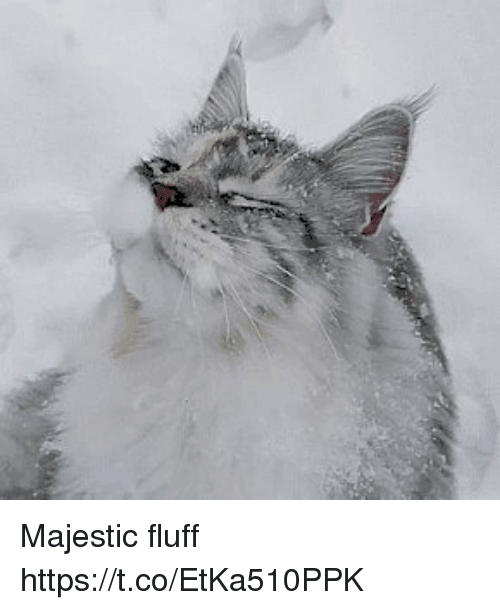Fluff, Majestic, and Https: Majestic fluff https://t.co/EtKa510PPK