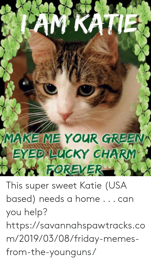 Friday, Memes, and Forever: MAKE ME YOUR GREEN  FOREVER This super sweet Katie (USA based) needs a home . . .   can you help? https://savannahspawtracks.com/2019/03/08/friday-memes-from-the-younguns/