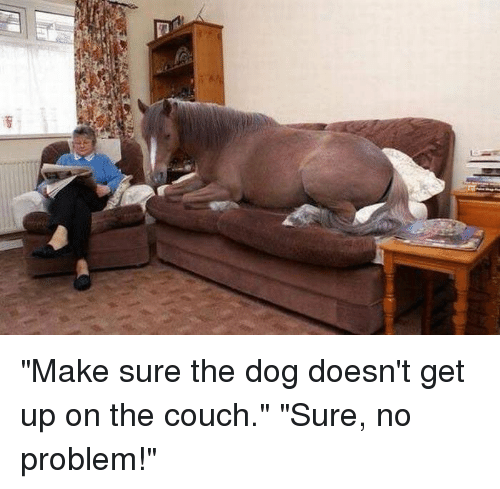 Funny, Couch, and Dog