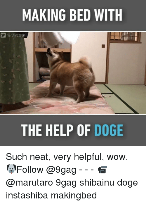 9gag, Doge, and Memes: MAKING BED WITH  marutaro 2000  THE HELP OF  DOGE Such neat, very helpful, wow. 🐶Follow @9gag - - - 📹@marutaro 9gag shibainu doge instashiba makingbed