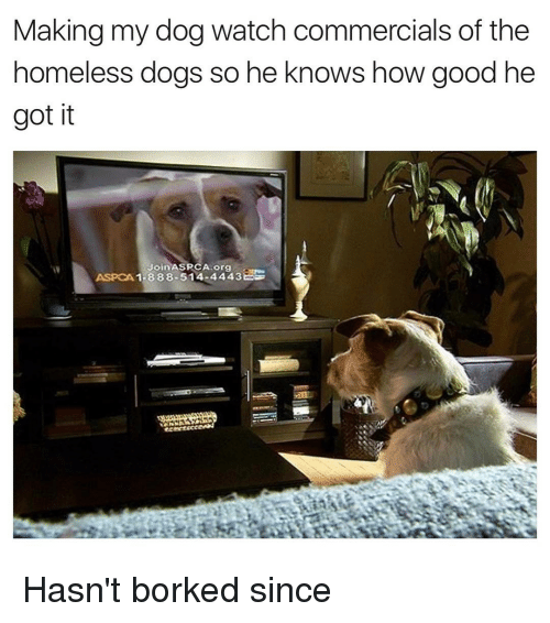 7a52defdad Making My Dog Watch Commercials of the Homeless Dogs So He Knows How ...