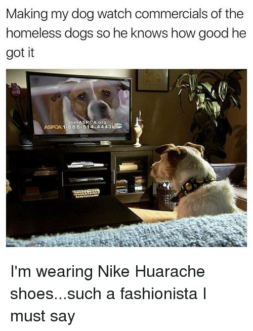 Making my dog watch commercials of the homeless dogs so he knows how memes aspca and making my dog watch commercials of the homeless dogs m4hsunfo