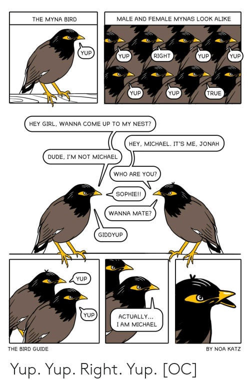 Dude, True, and Girl: MALE AND FEMALE MYNAS LOOK ALIKE  THE MYNA BIRD  YUP  YUP  YUP  RIGHT  YUP  YUP  YUP  TRUE  HEY GIRL, WANNA COME UP TO MY NEST?  HEY, MICHAEL. IT'S ME, JONAH  DUDE, I'M NOT MICHAEL  WHO ARE YOU?  SOPHIE!!  WANNA MATE?  GIDDYUP  YUP  YUP  ACTUALLY...  I AM MICHAEL  THE BIRD GUIDE  BY NOA KATZ Yup. Yup. Right. Yup. [OC]